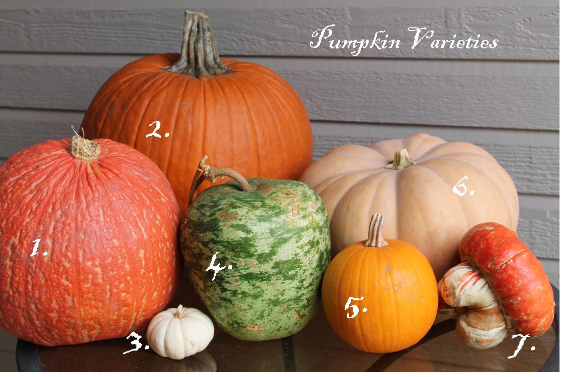 Pumpkins, Gourds, and Squash, Oh My!