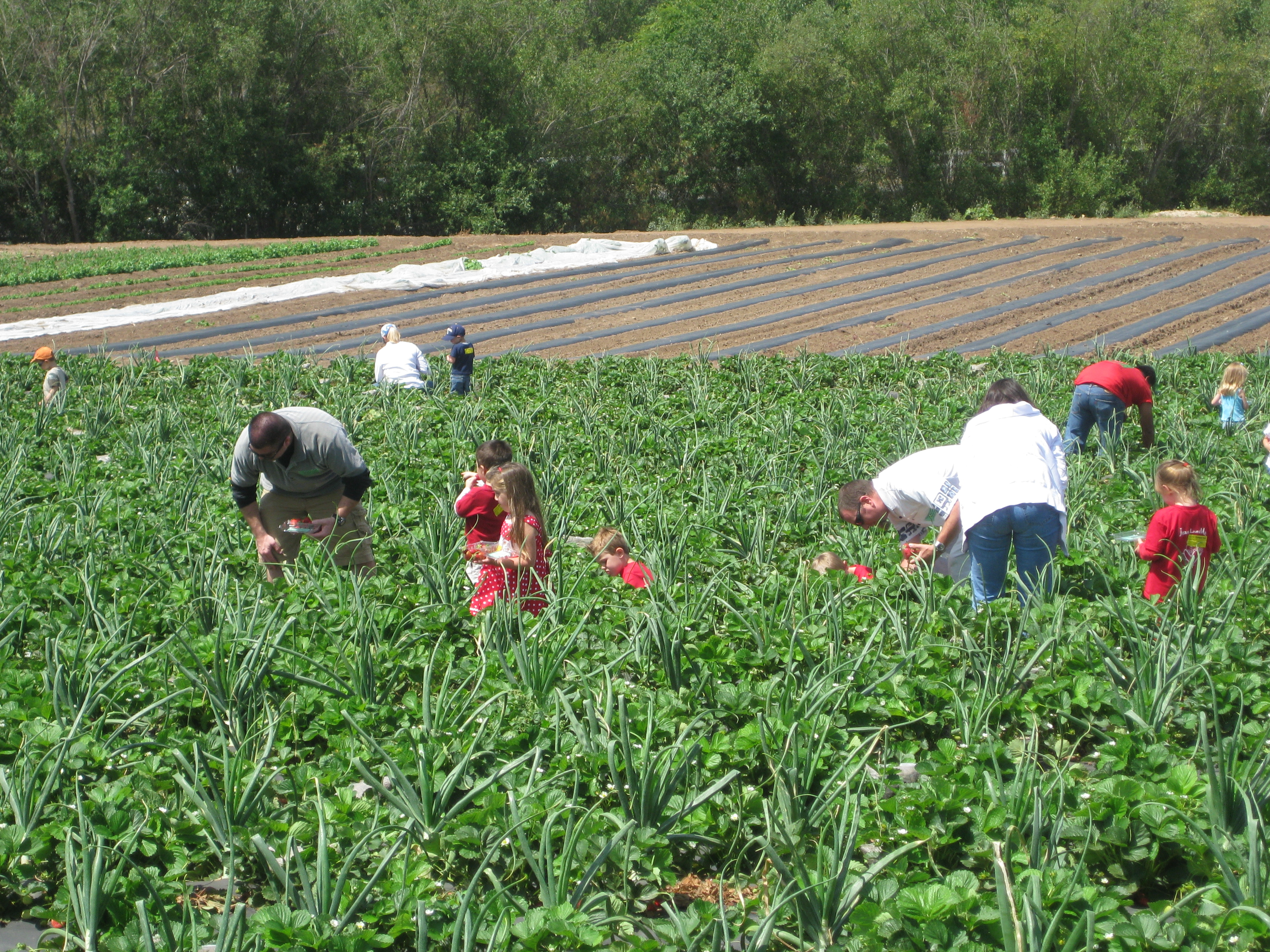 What's Hot in Southern California :: Tanaka Farms