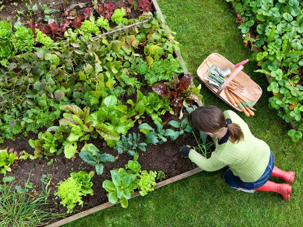 Gardening for Nutrition