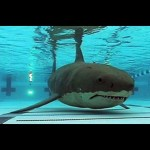 Anyone else have this childhood fear after watching JAWS? #childhood…