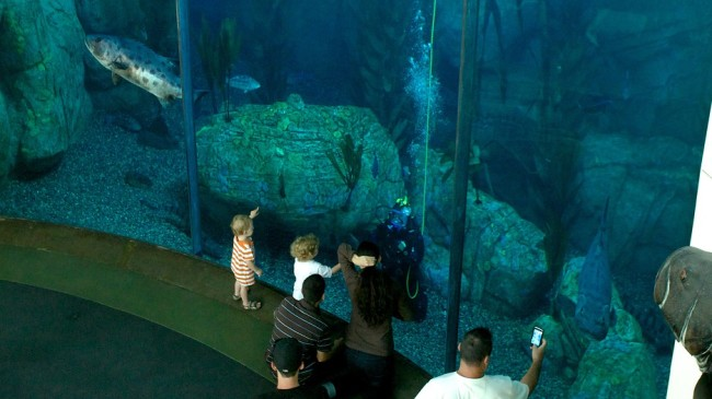 Homeschool At The Aquarium Of The Pacific In Long Beach