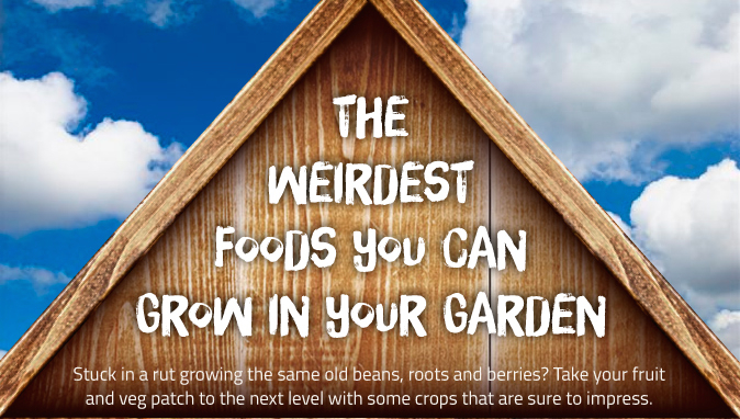 The Weirdest Foods You Can Grow In Your Garden