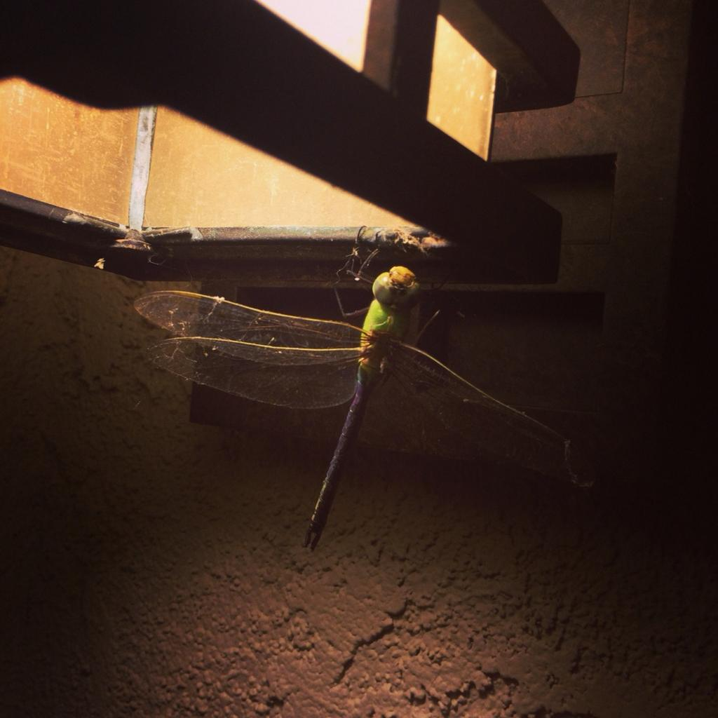 Instagram Inspiration :: The Wonder of the Dragonfly