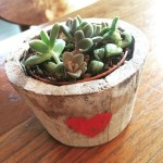 Isn't she sweet? Isn't she lovely? baby succulents are super…