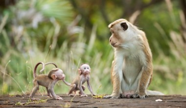 Disneynature's MONKEY KINGDOM is Perfect for the Whole Family