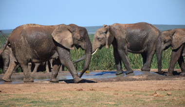 An Awesome and Affordable South African Safari – Addo Elephant Park