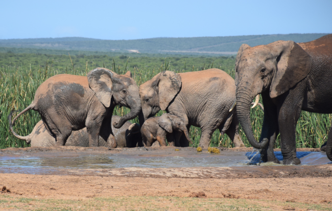 an awesome and affordable south african safari addo elephant park