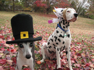 photo-thanksgiving-pets-2058559071_5268d18e08_z