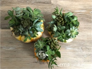 succulent-12