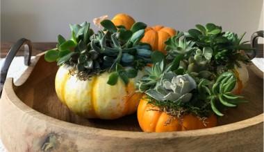 Gorgeous DIY Succulent Pumpkin Planters