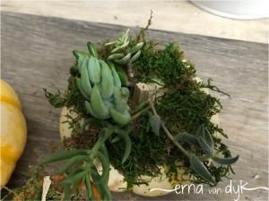 succulent-7