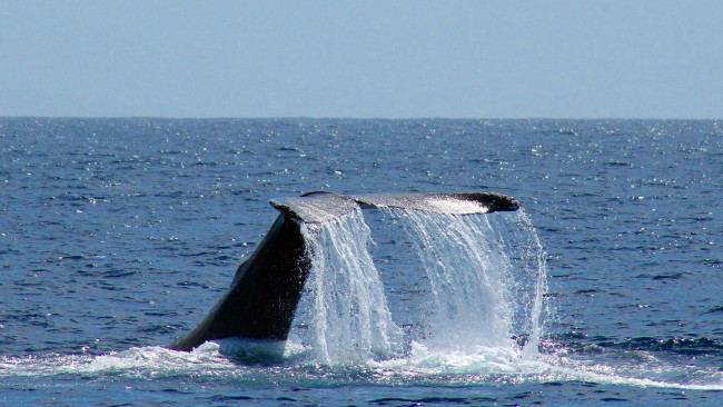 March.calendar.1448996229-dolphin_whale_watching_tickets