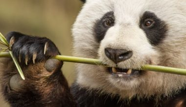 Disneynature's BORN in CHINA out now on Blu-ray + DVD + Digital